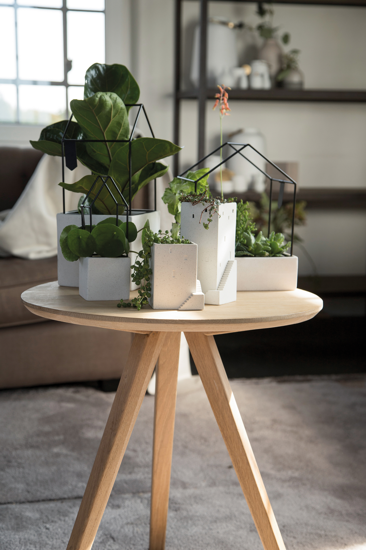 Mit »Hausgarten« und »Gartenstadt« wird dein Zuhause zur grünen Oase