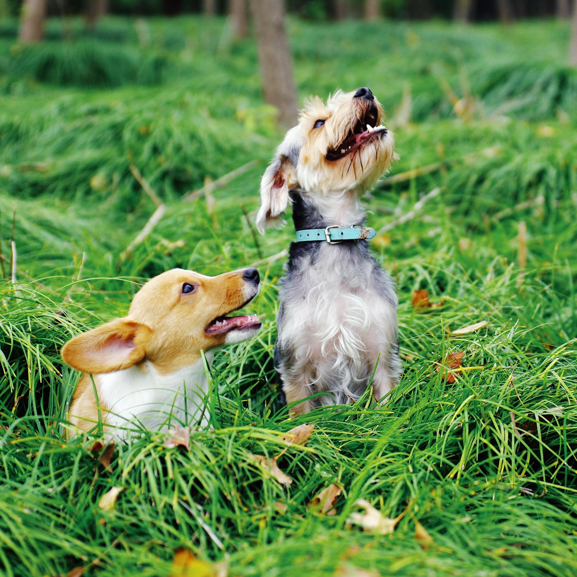 Diese zwei Racker haben keine Angst vor Zecken – dank der Borreliose-Impfung für Hunde