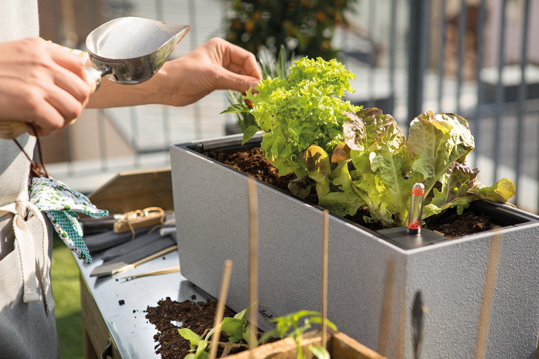 Träumst du noch vom eigenen Salatbeet oder gärtnerst du schon?