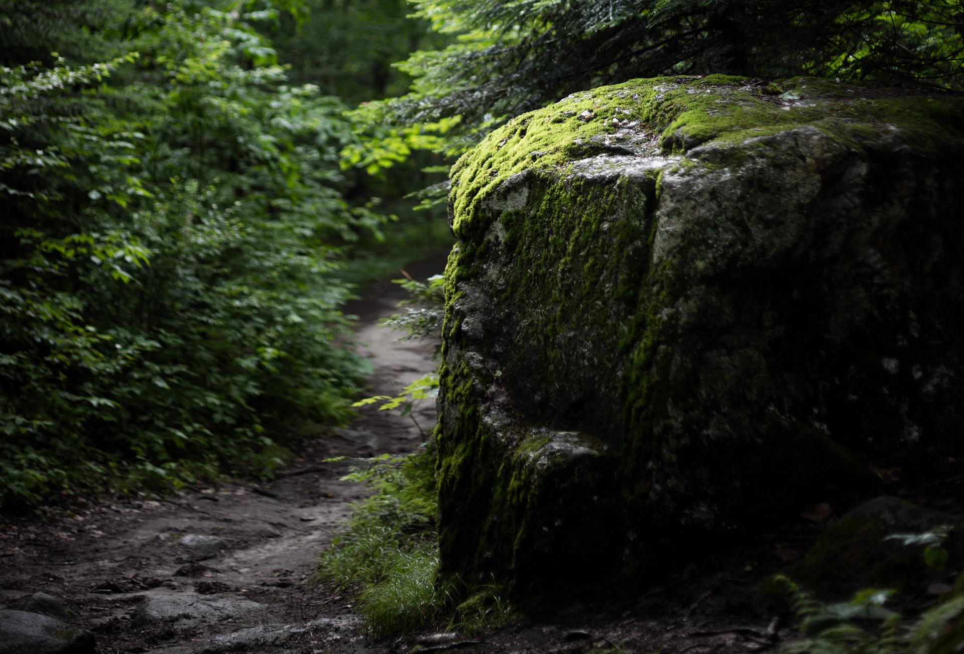 Im Wald sind wir mit uns und der Natur im Einklang