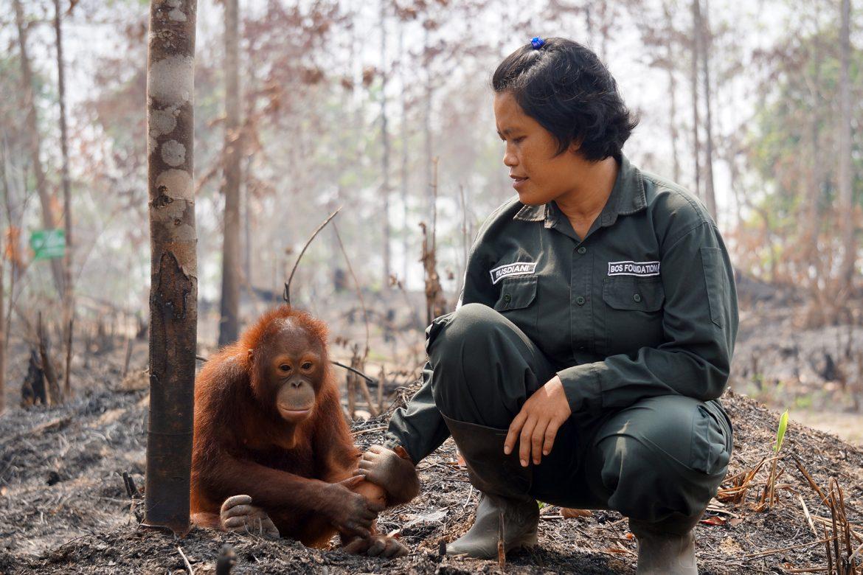 Weleda hilft Orang-Utans auf Borneo