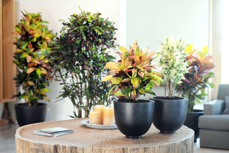 Wohlfühloasen mit Pflanzen schaffen