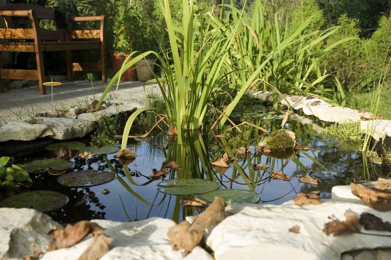Jetzt Gartenteiche winterfest machen - So überleben Fische in der kalten Jahreszeit