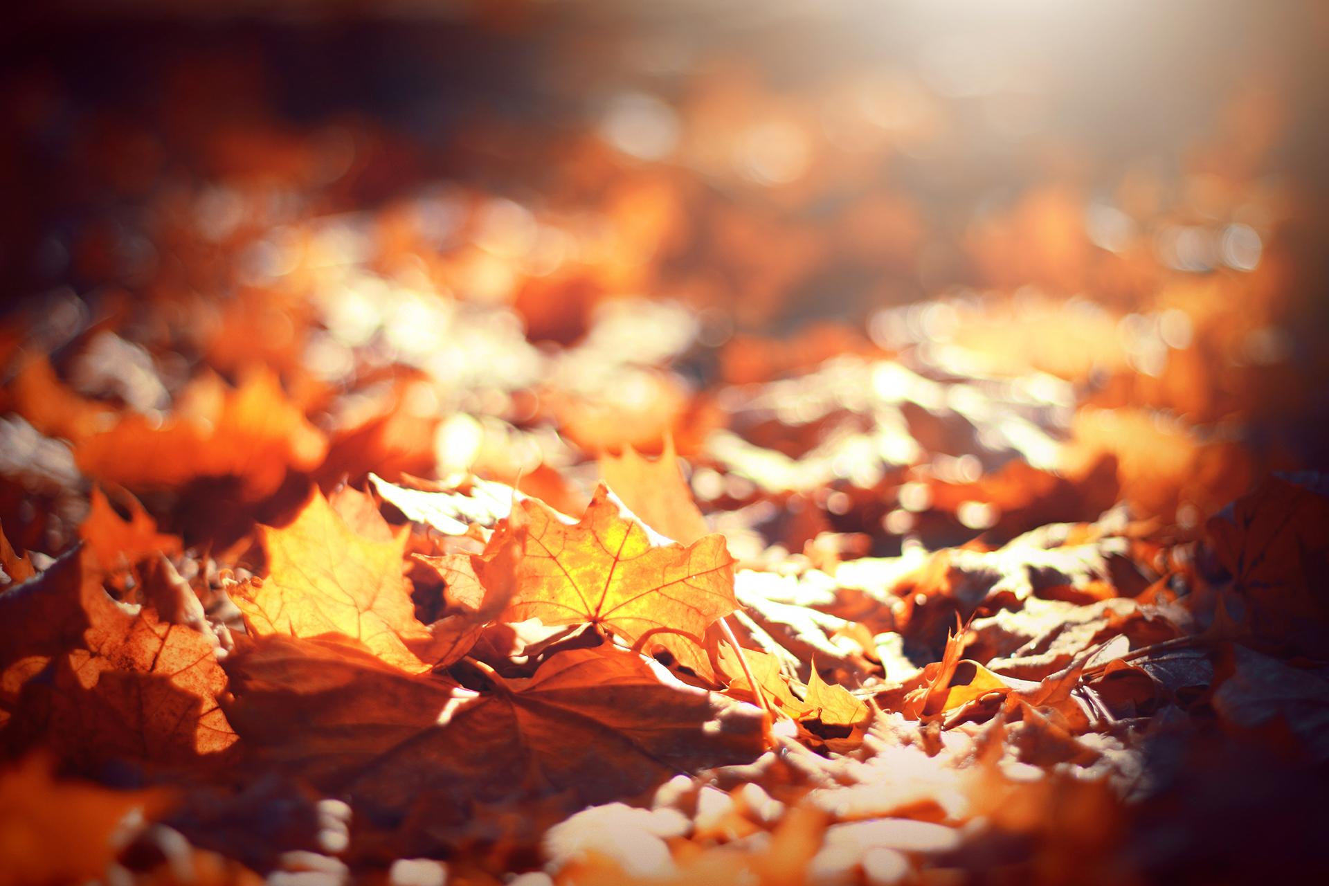 Mit meinem »Wundercocktail« kommst du gesund durch den Herbst
