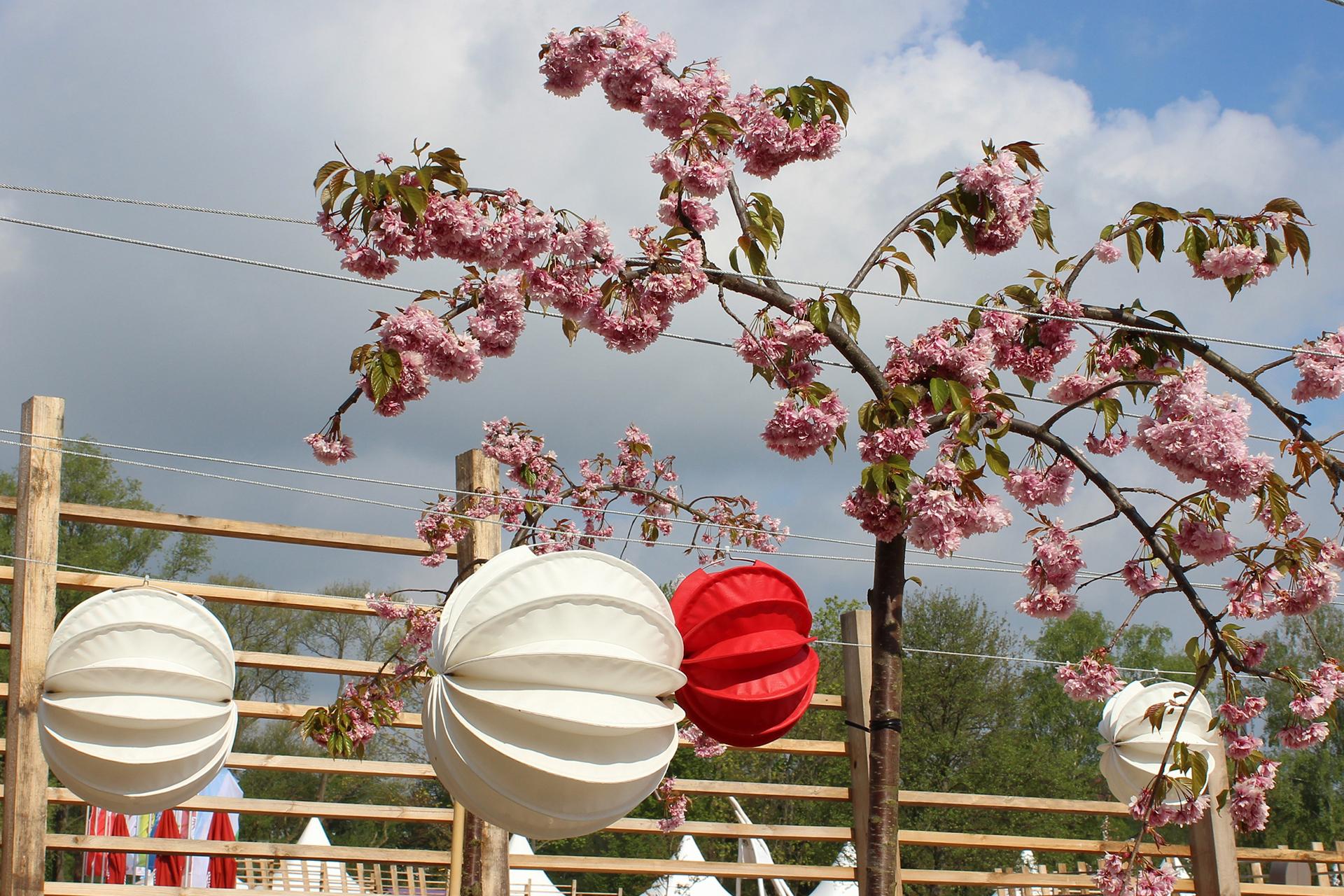 Stimmungsvolles Ambiente zum Frühlingsfest